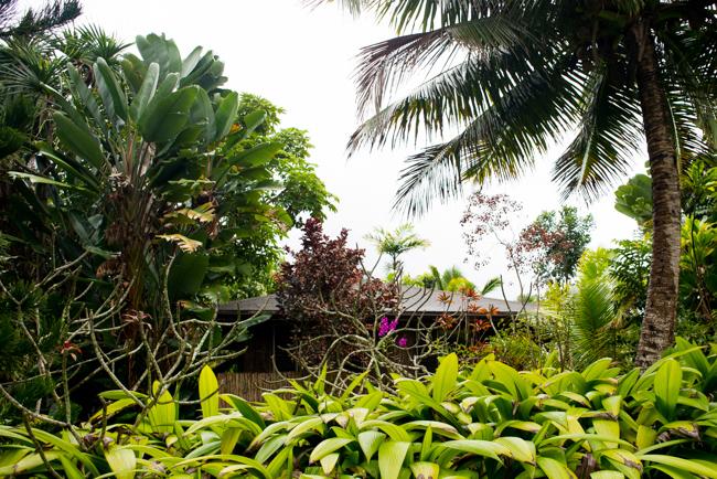 Kauai-Travel-2013-ryanbenoitphoto-thehorticult-RMB_3996