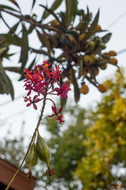 Smarty-Plants-Riviera-Magazine-ryanbenoitphoto-thehorticult-RMB_6521