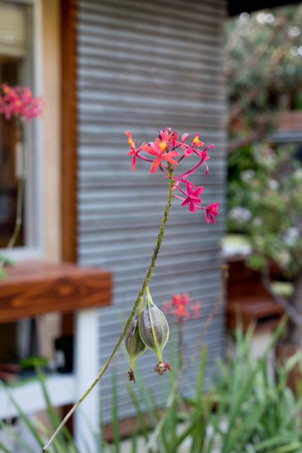 20-things-spring-ryanbenoitphoto-thehorticult-RMB_7593