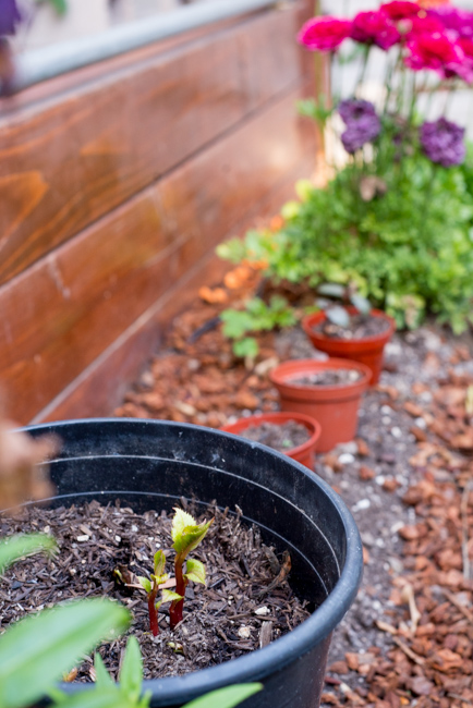 20-things-spring-ryanbenoitphoto-thehorticult-RMB_7605