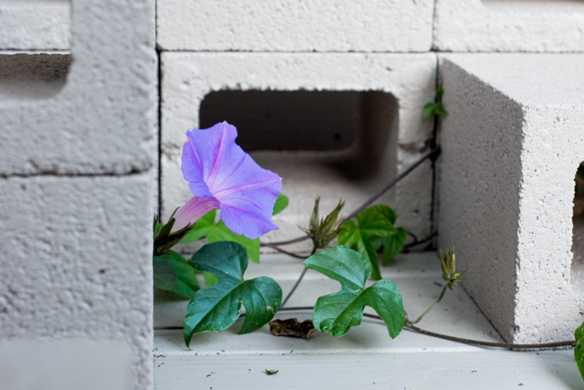20-things-spring-ryanbenoitphoto-thehorticult-RMB_7614