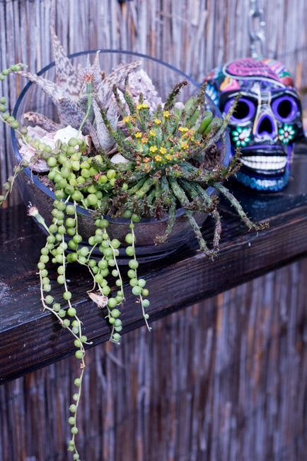 20-things-spring-ryanbenoitphoto-thehorticult-RMB_7635