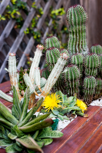 20-things-spring-ryanbenoitphoto-thehorticult-RMB_7662