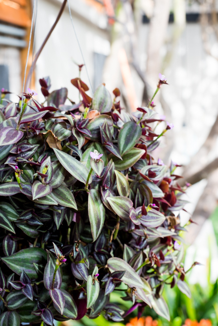 20-things-spring-ryanbenoitphoto-thehorticult-RMB_7691