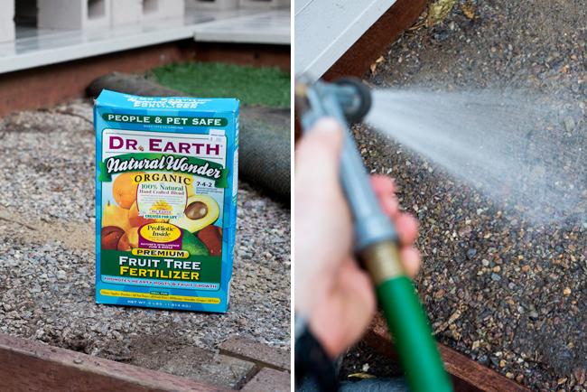 Dr-Earth-Fruit-Tree-fertilizer-application