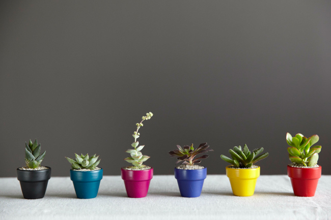 Fall Collection-featured-on-thehorticult