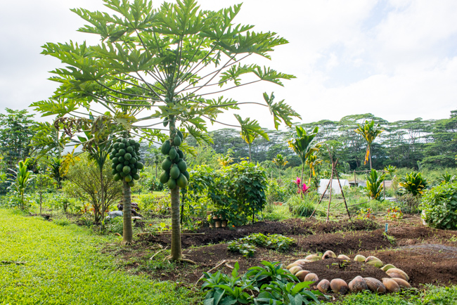 Kauai-Fresh-Farms-ryanbenoitphoto-thehorticult-RMB_4734