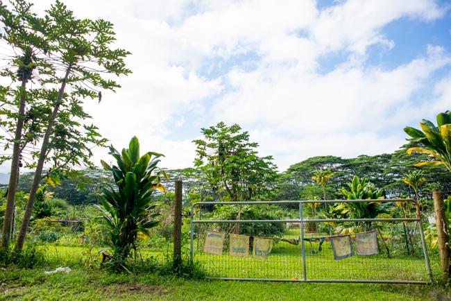 Kauai-Fresh-Farms-ryanbenoitphoto-thehorticult-RMB_4735