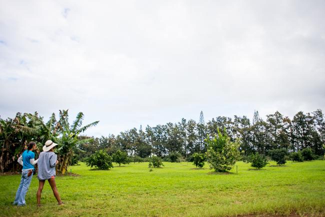 Kauai-Fresh-Farms-ryanbenoitphoto-thehorticult-RMB_4746