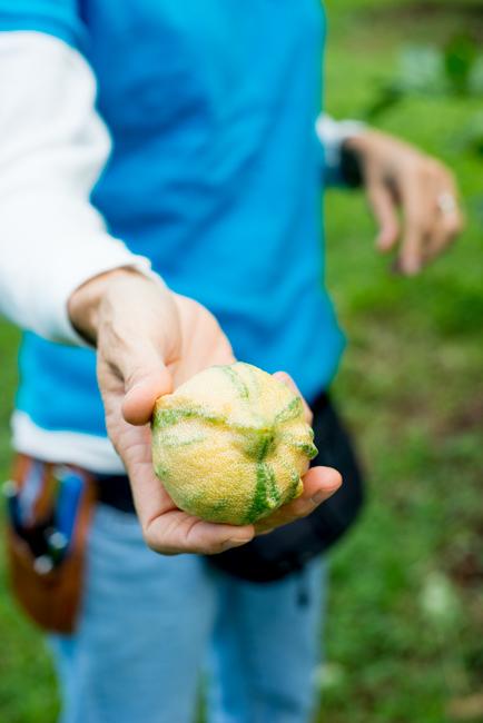 Kauai-Fresh-Farms-ryanbenoitphoto-thehorticult-RMB_4748