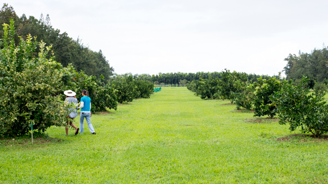 Kauai-Fresh-Farms-ryanbenoitphoto-thehorticult-RMB_4755