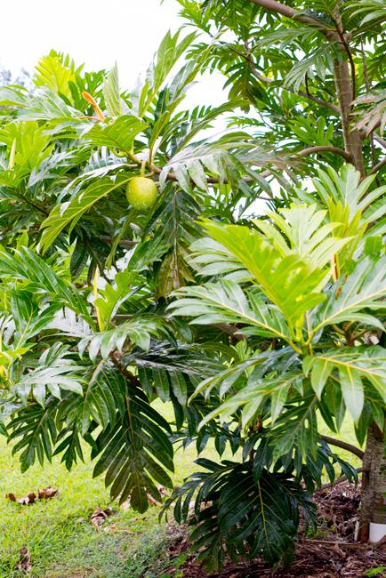 Kauai-Fresh-Farms-ryanbenoitphoto-thehorticult-RMB_4757