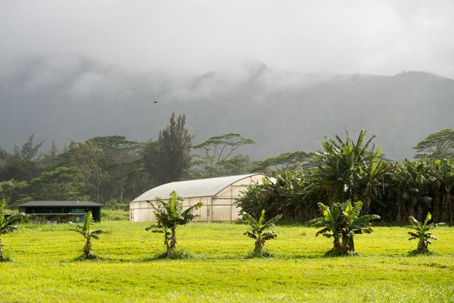 Kauai-Fresh-Farms-ryanbenoitphoto-thehorticult-RMB_4812