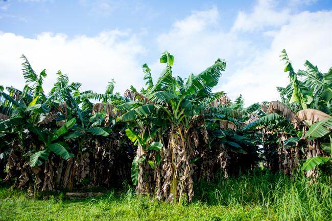 Kauai-Fresh-Farms-ryanbenoitphoto-thehorticult-RMB_4834