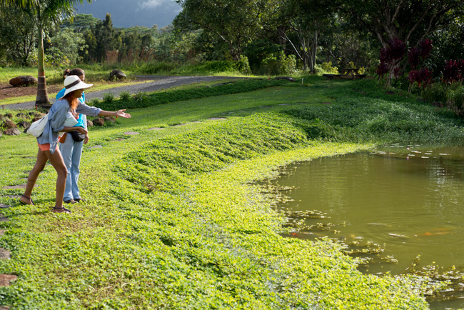 Kauai-Fresh-Farms-ryanbenoitphoto-thehorticult-RMB_4842