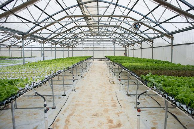 Kauai-Fresh-Farms-ryanbenoitphoto-thehorticult-RMB_4863