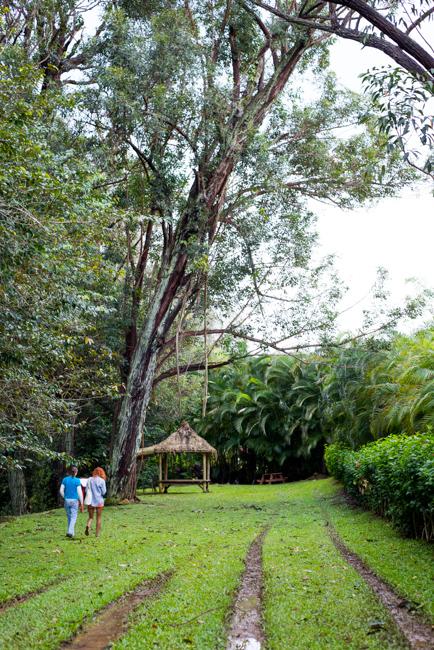 Kauai-Fresh-Farms-ryanbenoitphoto-thehorticult-RMB_4904