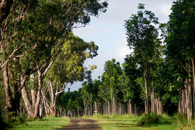 Kauai-Fresh-Farms-ryanbenoitphoto-thehorticult-RMB_4920