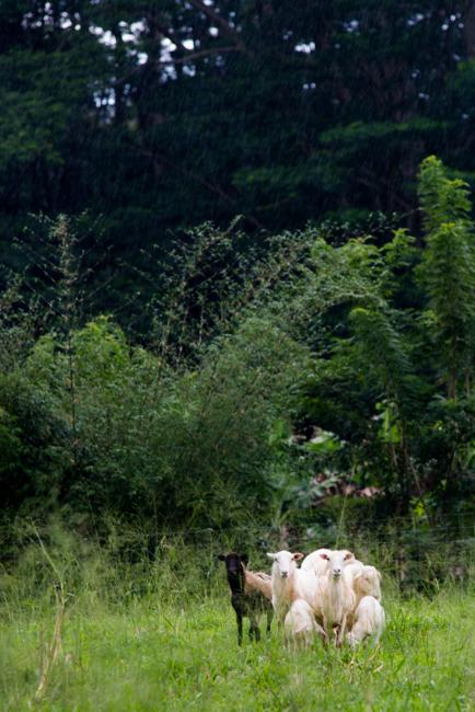 Kauai-Travel-2013-ryanbenoitphoto-thehorticult-RMB_4773