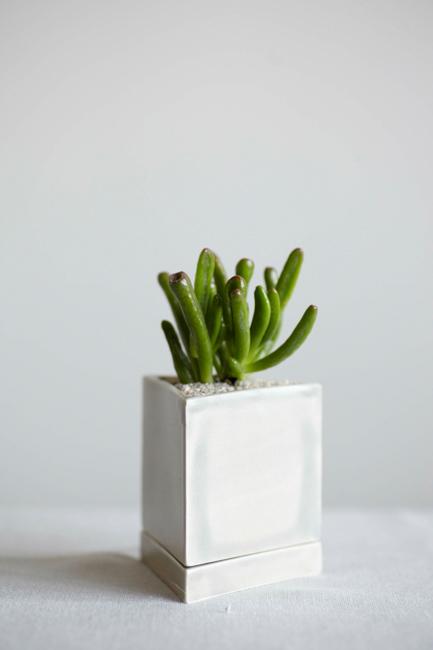 Crassula portulacea or spoon jade.