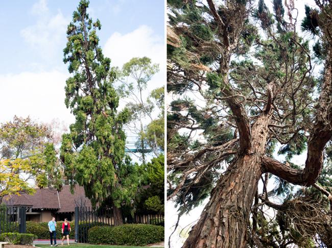 cedar-sculpture-garden