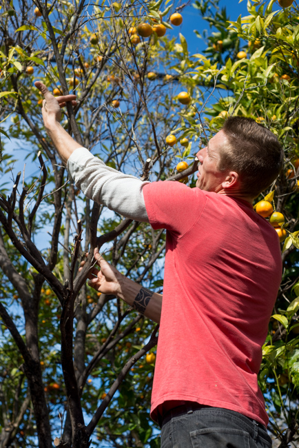 citrus-tree-rescue-ryanbenoitphoto-thehorticult-RMB_6822