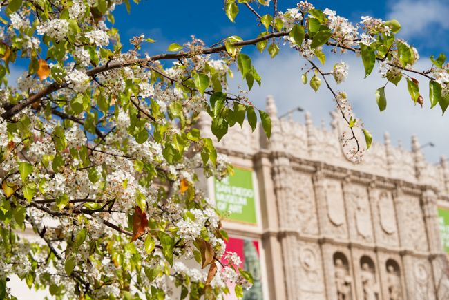 white-blooms-pear-trees-ryanbenoitphoto-thehorticult-RMB_7352