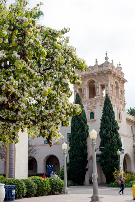 white-blooms-pear-trees-ryanbenoitphoto-thehorticult-RMB_7407
