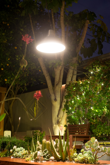 Our saucer-like pendant lamp illuminates our succulent table at night.