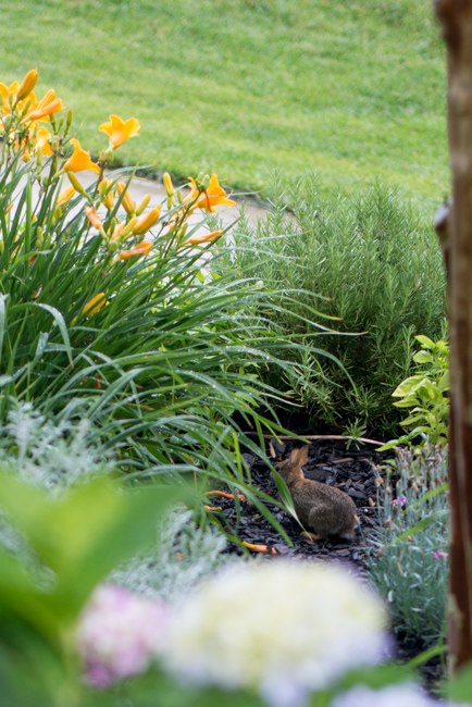 Garden pests.