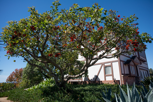 You can't miss the amazing coral tree at edge of the property.