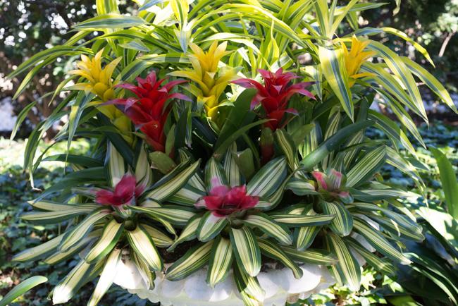 A bromeliad and dracaena arrangement.