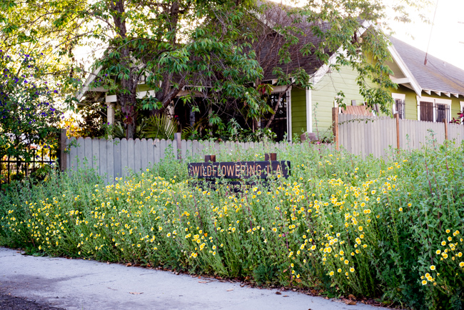 Wilflowering-LA-Site-25-Flatlands-Seed-Mix-ryanbenoitphoto-thehorticult-RMB_9677