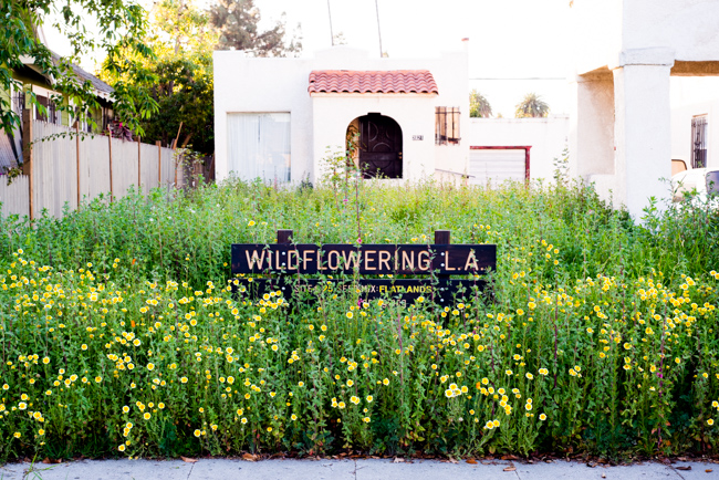 Wilflowering-LA-Site-25-Flatlands-Seed-Mix-ryanbenoitphoto-thehorticult-RMB_9678