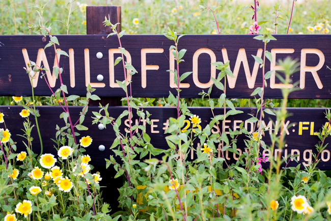 Wilflowering-LA-Site-25-Flatlands-Seed-Mix-ryanbenoitphoto-thehorticult-RMB_9681