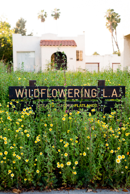 Wilflowering-LA-Site-25-Flatlands-Seed-Mix-ryanbenoitphoto-thehorticult-RMB_9683