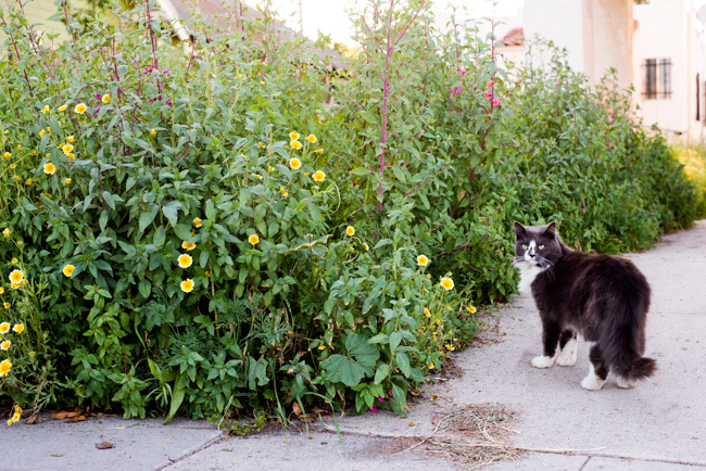 Wilflowering-LA-Site-25-Flatlands-Seed-Mix-ryanbenoitphoto-thehorticult-RMB_9691