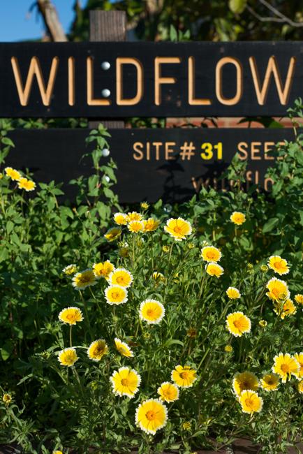 Wildflowering LA, Site 31, West Adams