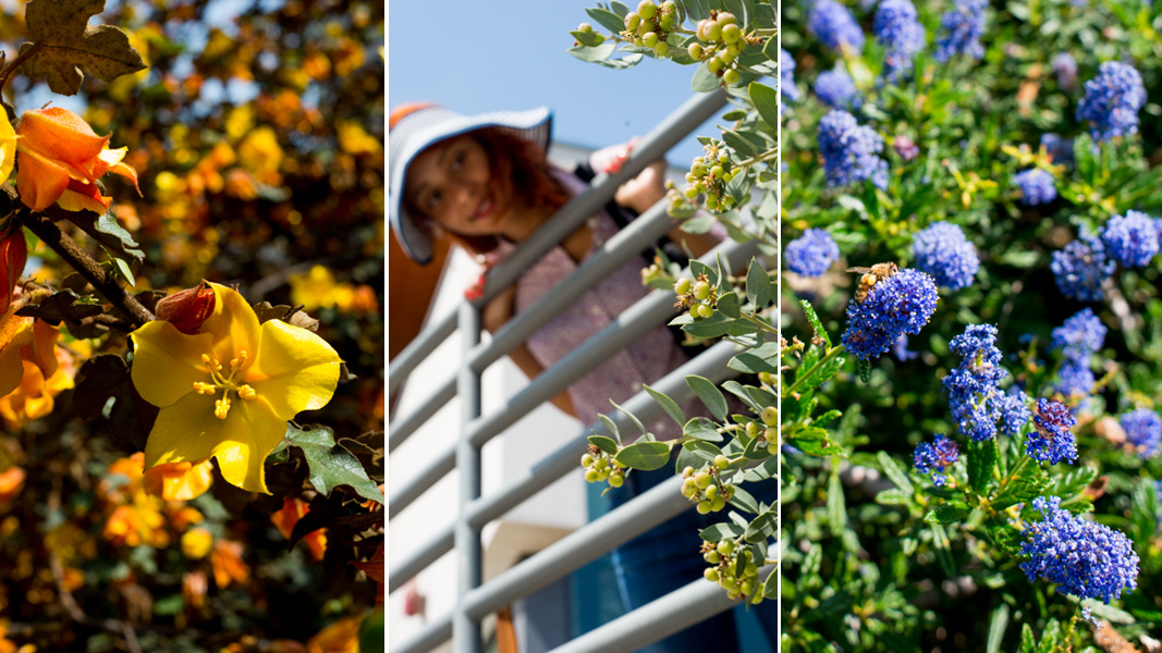 Locals only a surprising tour of southern california s for Southern california native plants