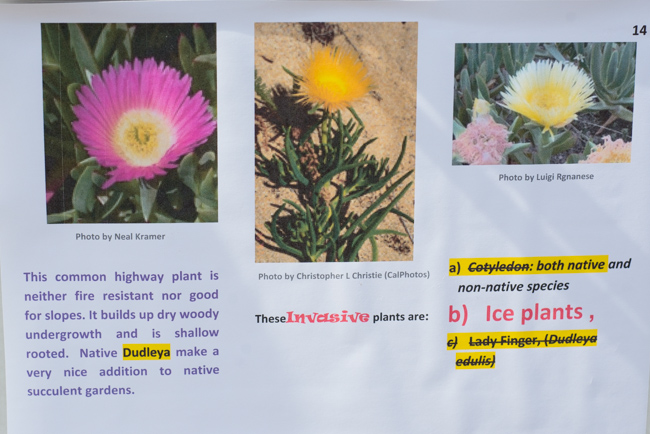 Native plant quiz!