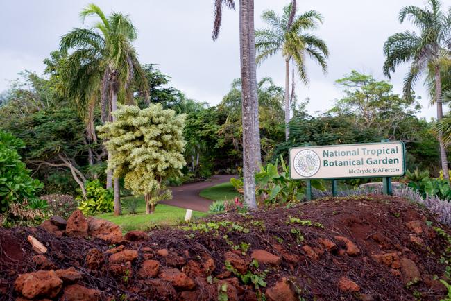Kauai-Travel-2013-ryanbenoitphoto-thehorticult-RMB_5408