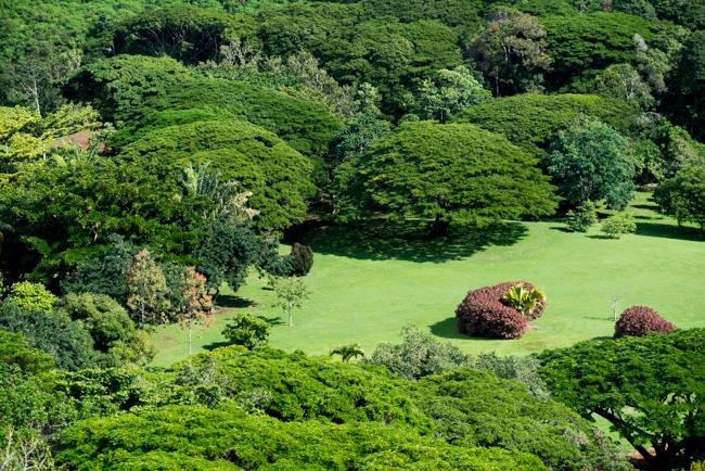 National Tropical Botanical Garden NTBG Kauai Ryanbenoitphoto Thehorticult