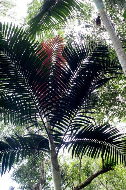 National-Tropical-Botanical-Garden-NTBG-Kauai-ryanbenoitphoto-thehorticult-RMB_5139