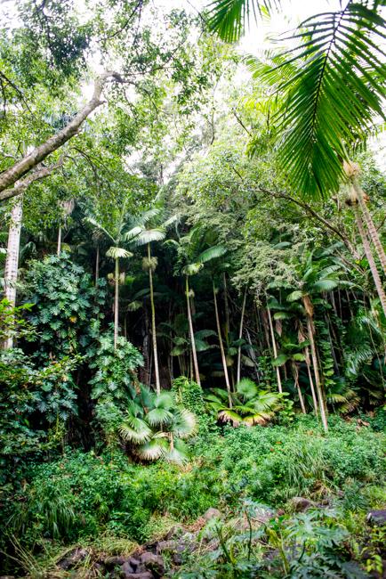 National-Tropical-Botanical-Garden-NTBG-Kauai-ryanbenoitphoto-thehorticult-RMB_5145