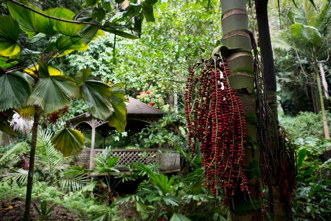 National-Tropical-Botanical-Garden-NTBG-Kauai-ryanbenoitphoto-thehorticult-RMB_5151