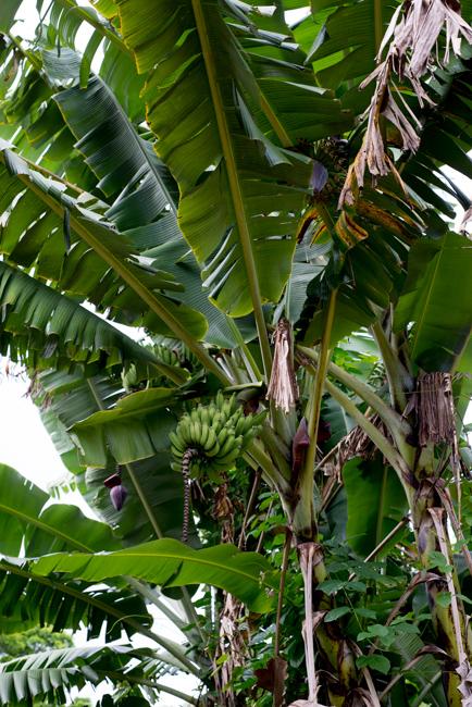 National-Tropical-Botanical-Garden-NTBG-Kauai-ryanbenoitphoto-thehorticult-RMB_5170