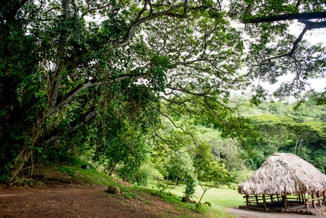 National-Tropical-Botanical-Garden-NTBG-Kauai-ryanbenoitphoto-thehorticult-RMB_5203