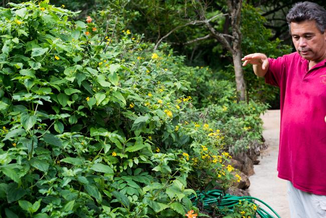 National-Tropical-Botanical-Garden-NTBG-Kauai-ryanbenoitphoto-thehorticult-RMB_5241