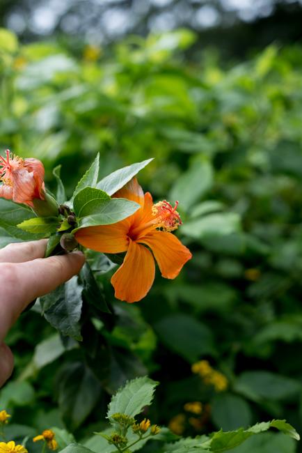 National-Tropical-Botanical-Garden-NTBG-Kauai-ryanbenoitphoto-thehorticult-RMB_5242