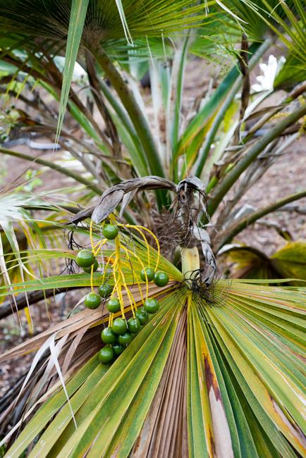 National-Tropical-Botanical-Garden-NTBG-Kauai-ryanbenoitphoto-thehorticult-RMB_5288